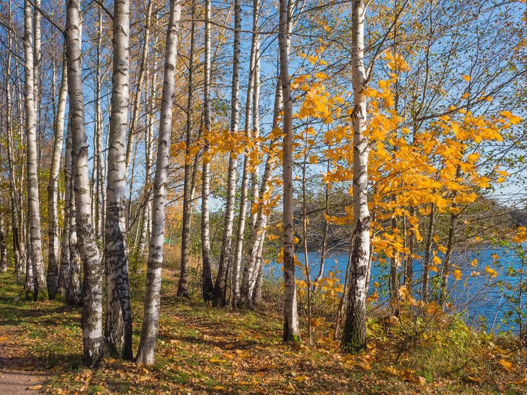 Золотая осень в парке 2 - Виталий