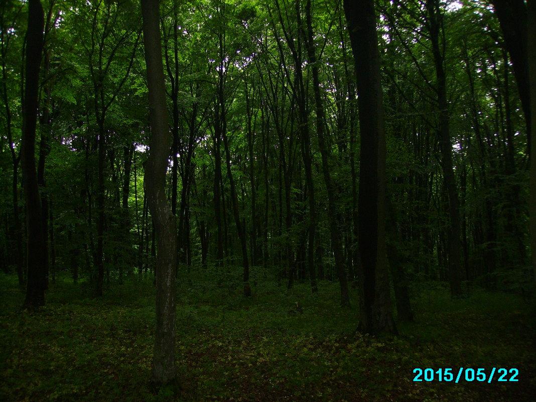 В   Крылосском   лесу - Андрей  Васильевич Коляскин