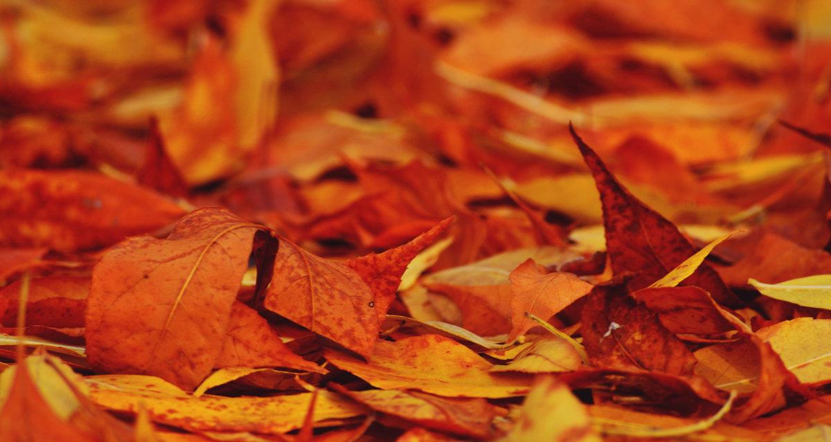 Осень золотая - Ирина Божко