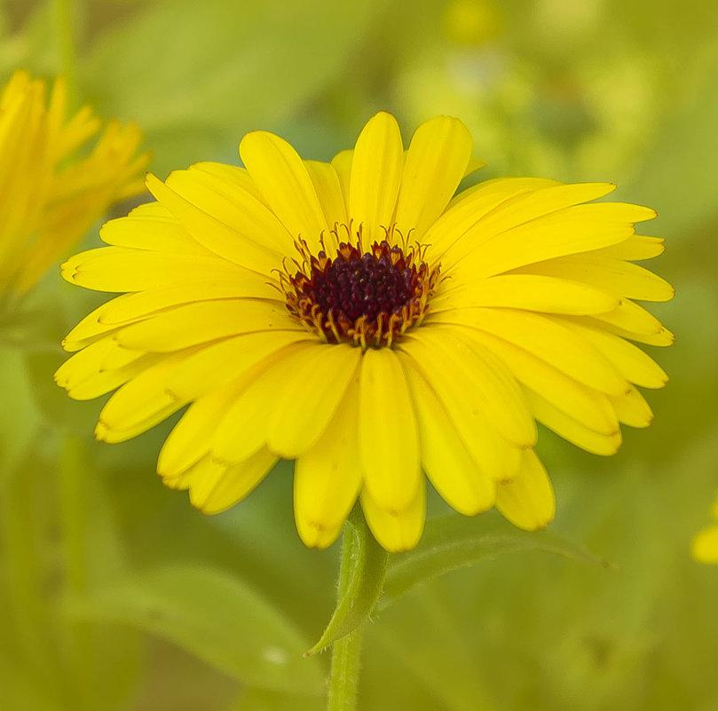 Цветок - Роман никандров