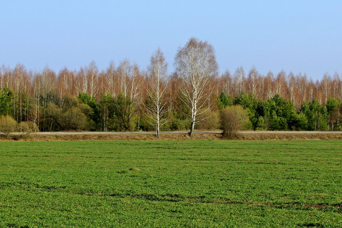 весенняя зелень - оксана