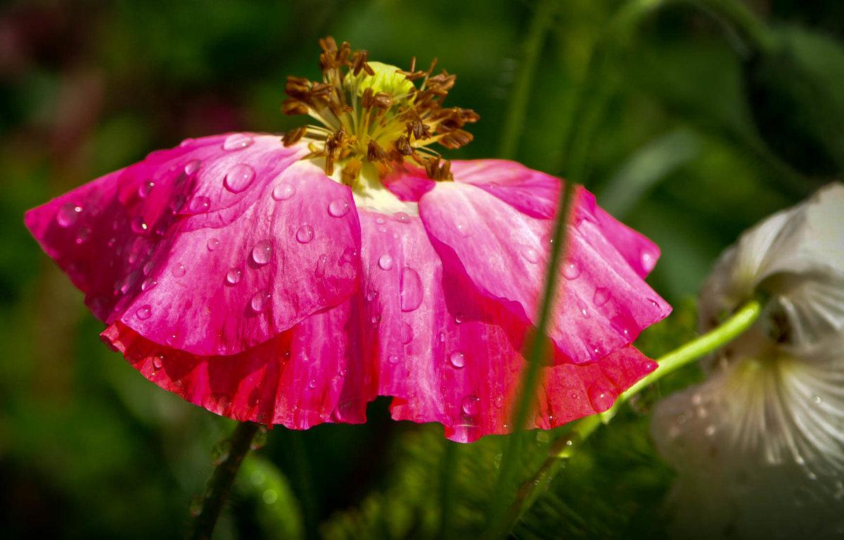 после дождя - Наталья Сорокина