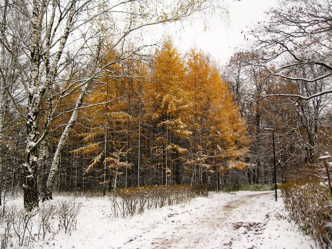 Осенняя зима - Джулия К.