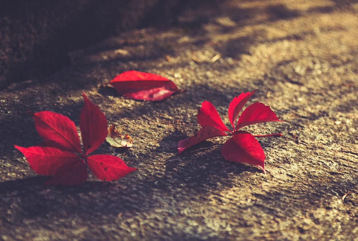 Осень - Юрий