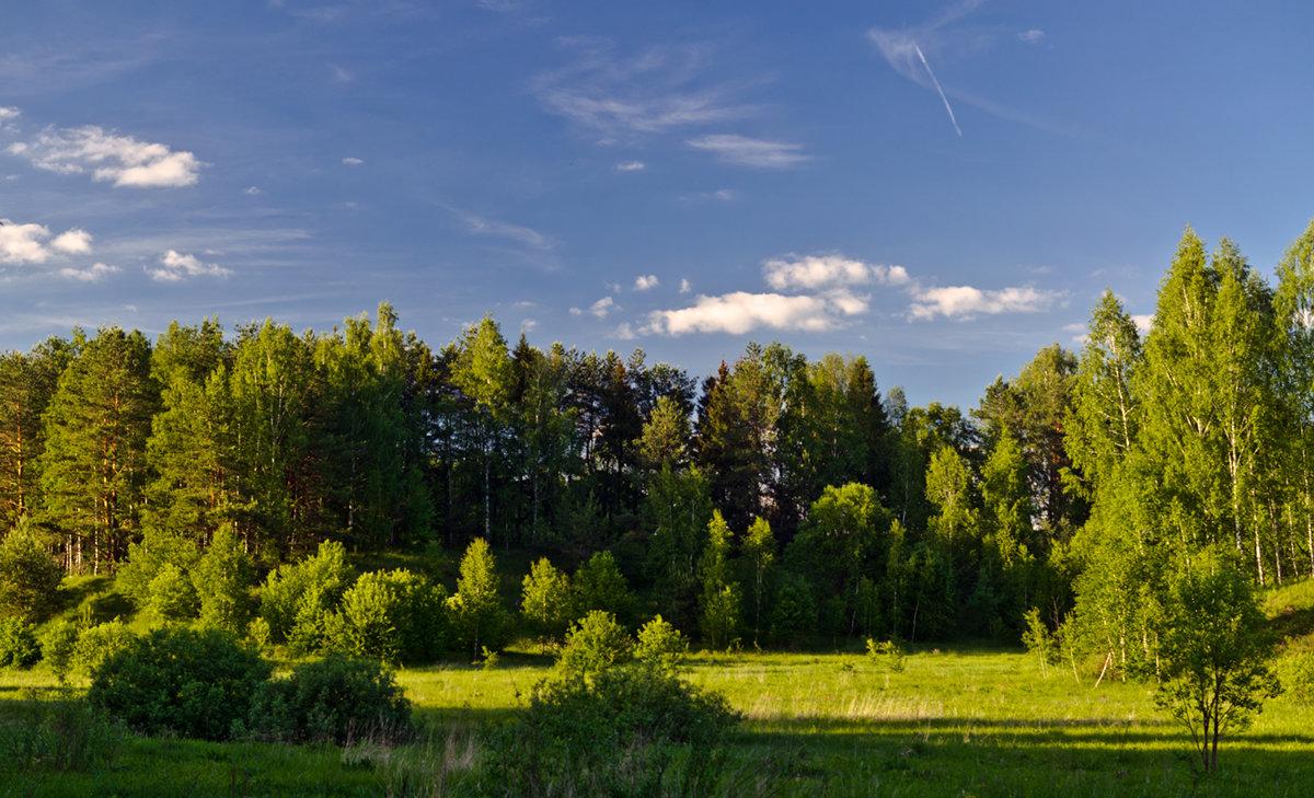 Солнечная поляна - Александр Березуцкий (nevant60)