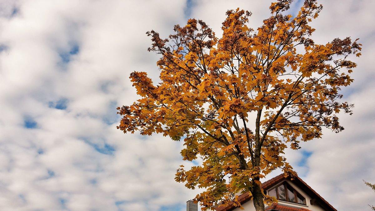 Осень в облаках - kuta75 оля оля