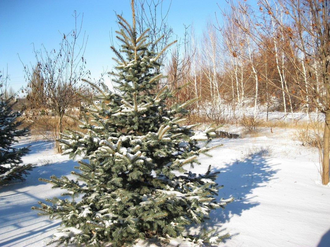 Первый снег - анатолий томас