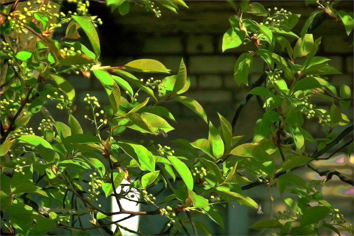 Начало цветения черёмухи - Фотогруппа Весна-Вера,Саша,Натан