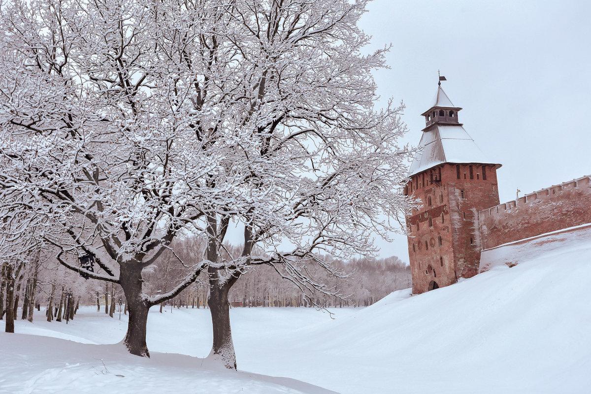 Зимние дубы - Евгений Никифоров
