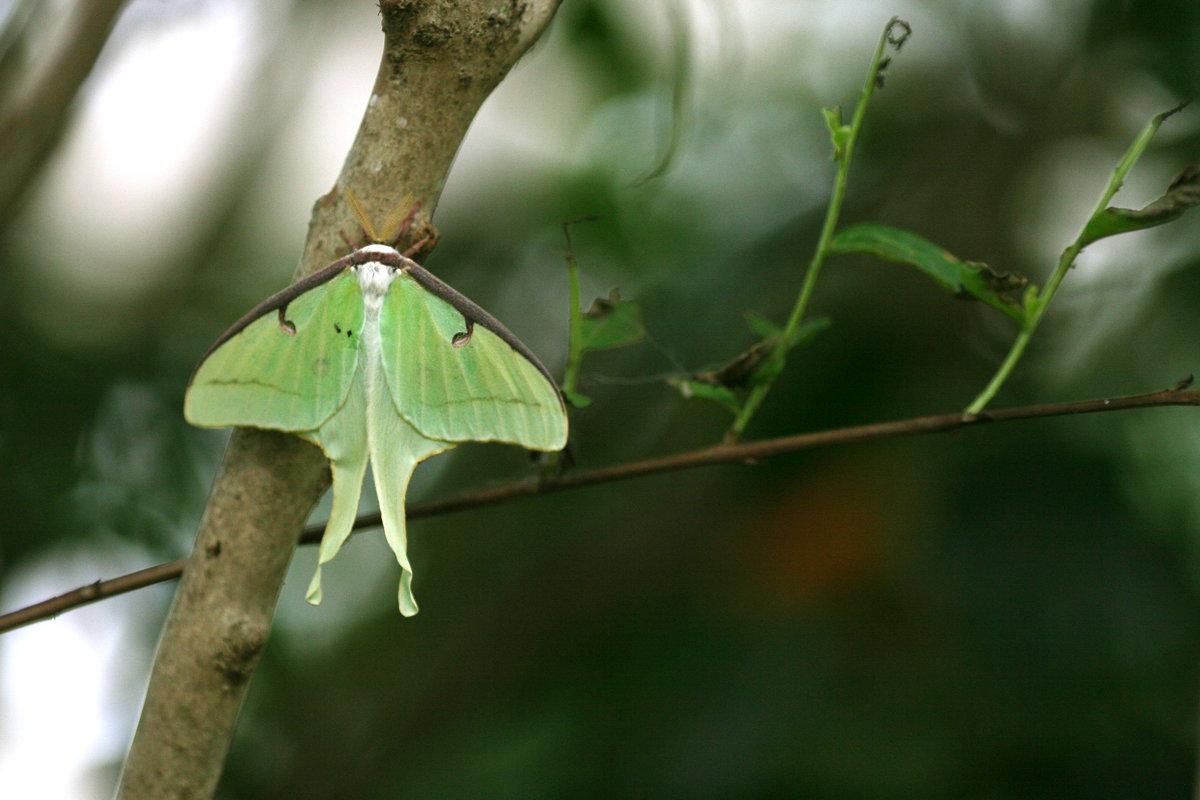 Бабочка павлиноглазка - Мария Самохина