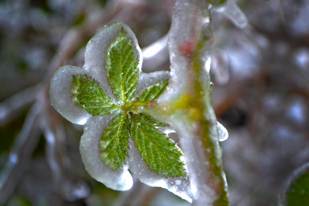 Зеленый леденец - Nina Streapan