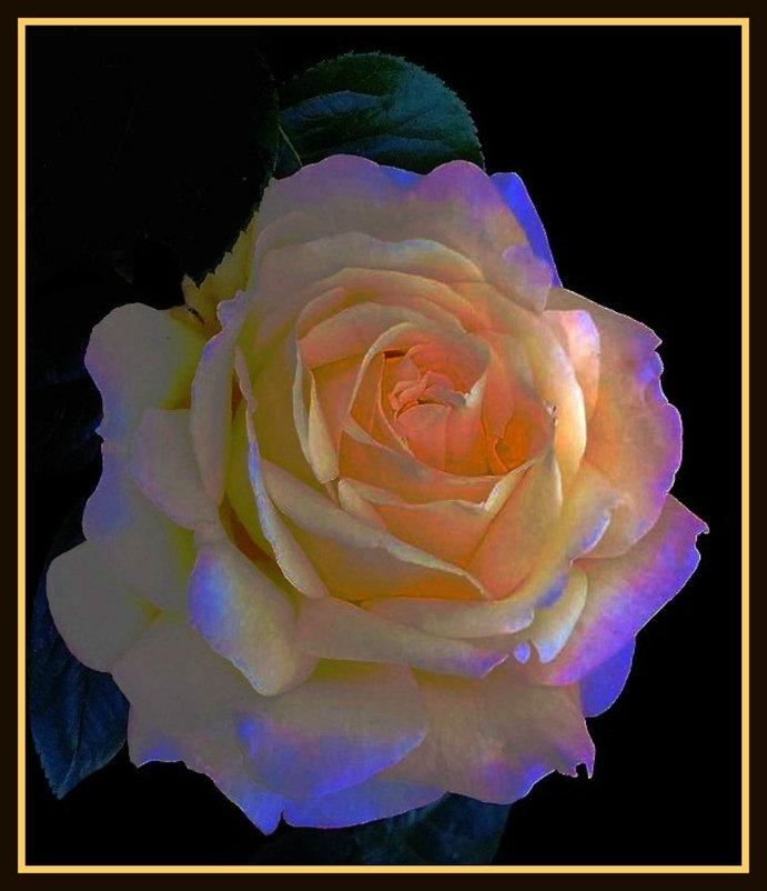 Утренние розы 1 - Владимир Хатмулин