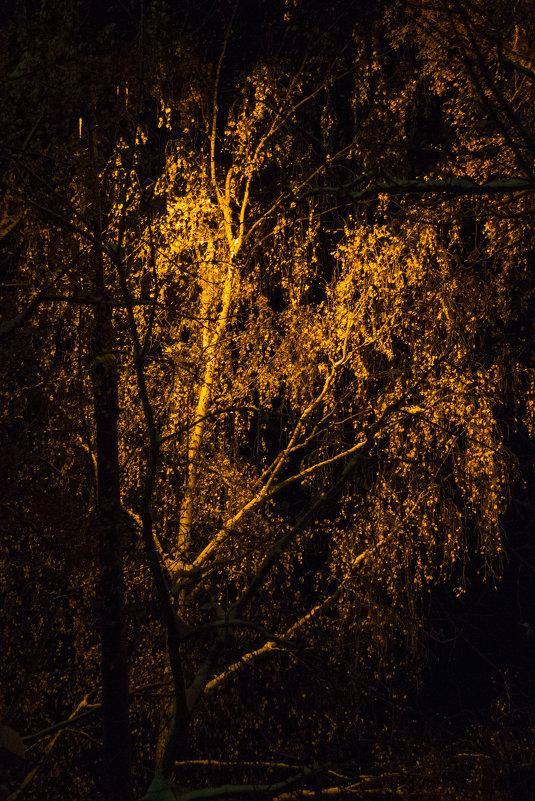 Золото ночи - Anna