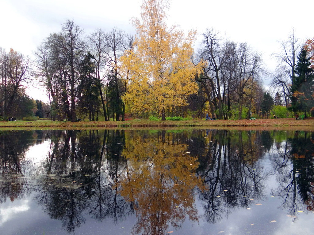 Осеннее дерево. - Алексей Цветков