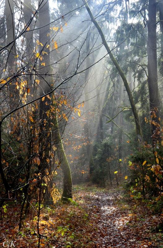 солнце в лесу 1 - Сергей Короленко