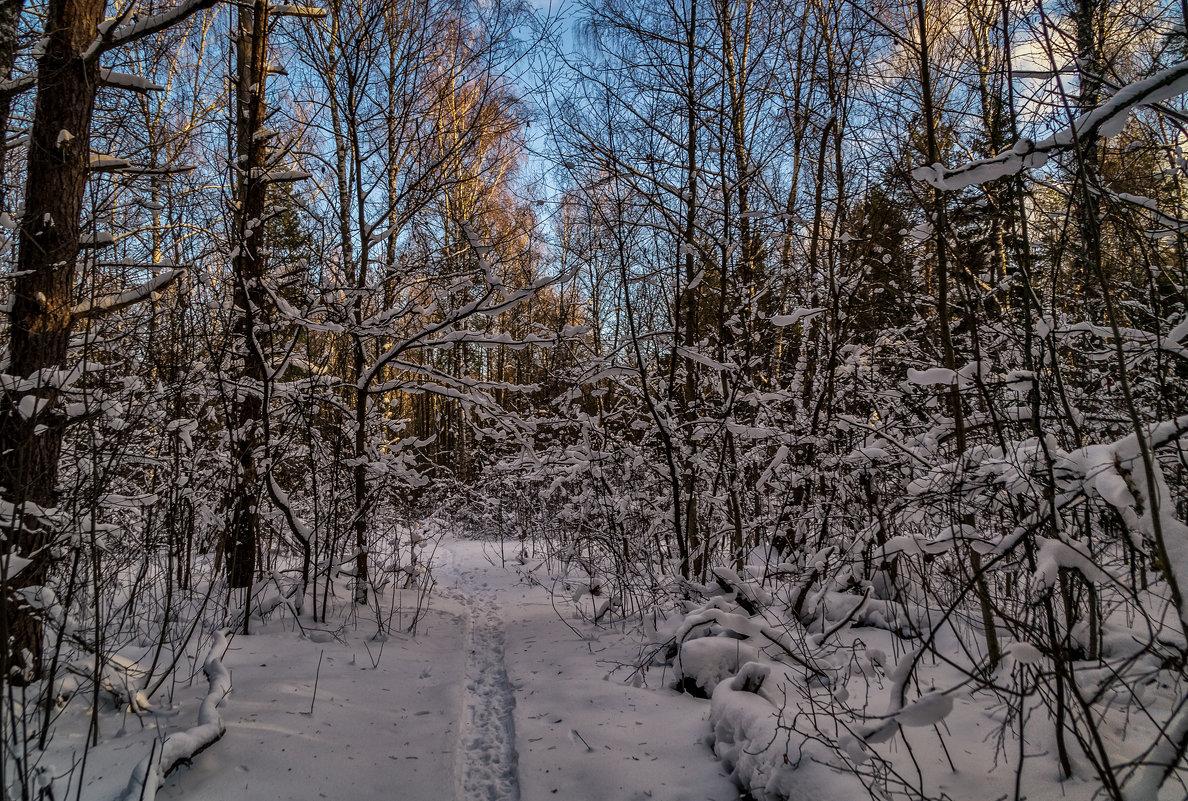 Зимний лес - Андрей Дворников