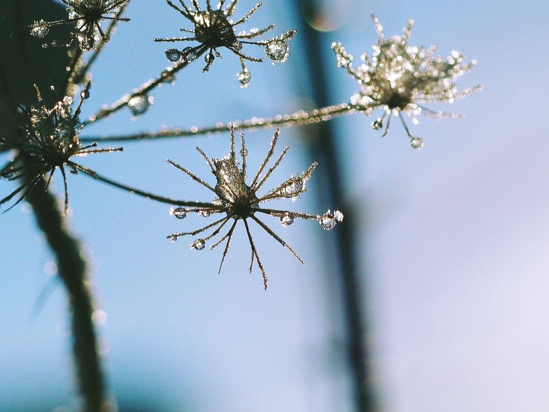В солнечном свете - Swetlana V