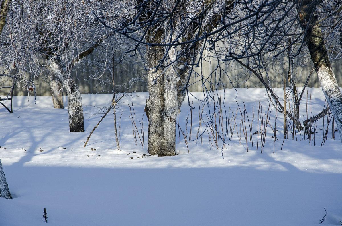 Зимний сад - Леонид Железнов