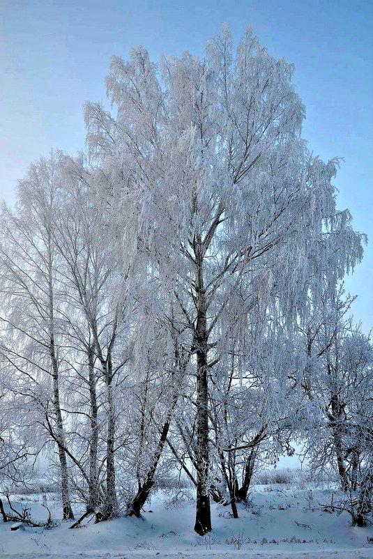 Зимняя краса. - Михаил Столяров
