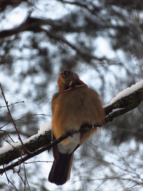 Еще неизвестная мне птаха (раза в 2-3 длиннее синицы) - Андрей Лукьянов