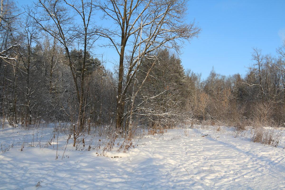 Зима - Владимир Холодницкий