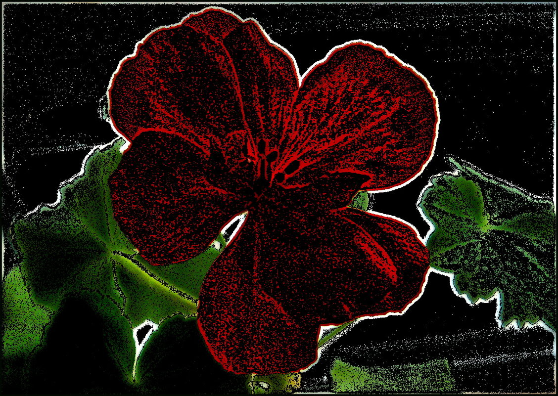 Цветок герани - Нина Корешкова