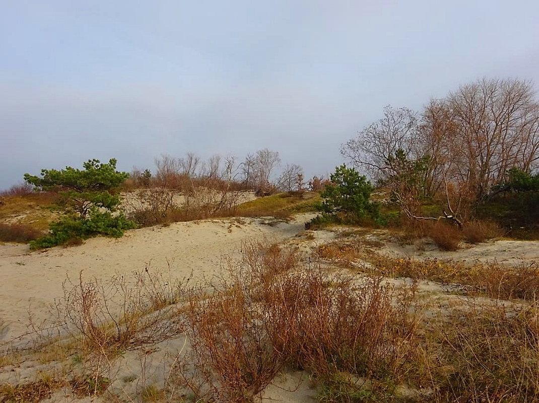 На побережье в ноябре - Маргарита Батырева