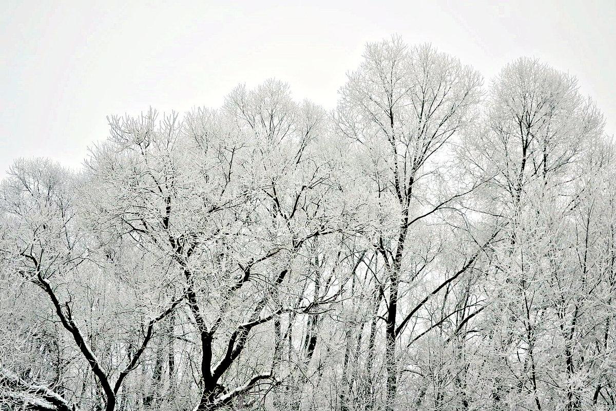 Декабрь. - Михаил Столяров