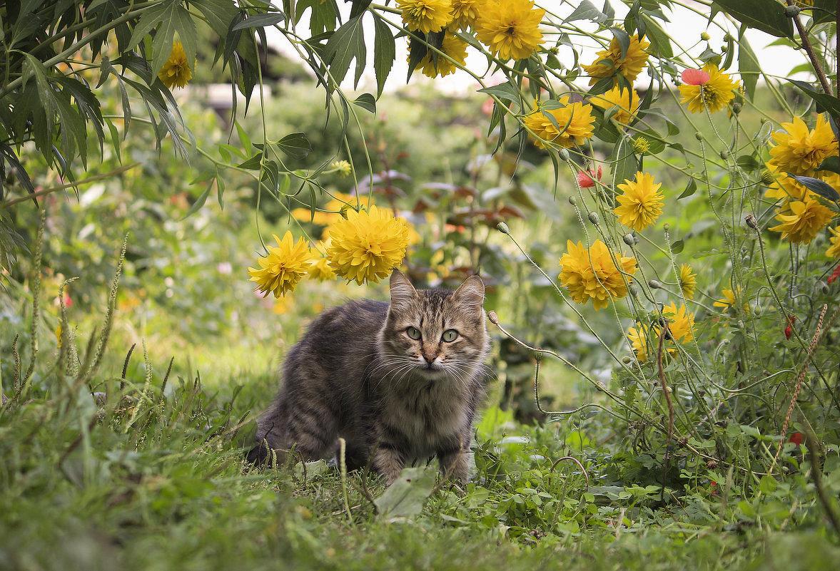 В цветочных джунглях - И.В.К. ))
