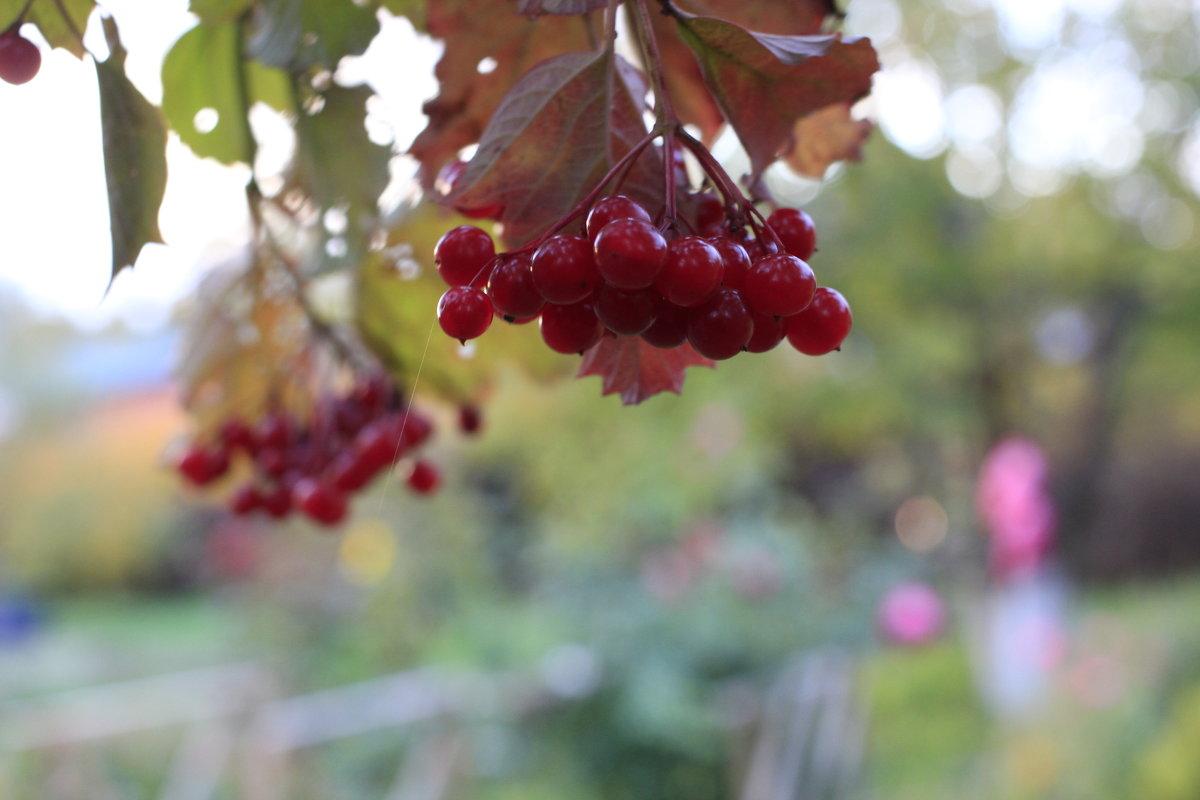 Осень - Ириника