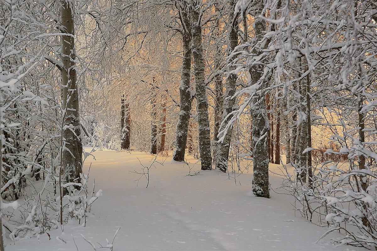 Зима зима - Виктор Бондаренко