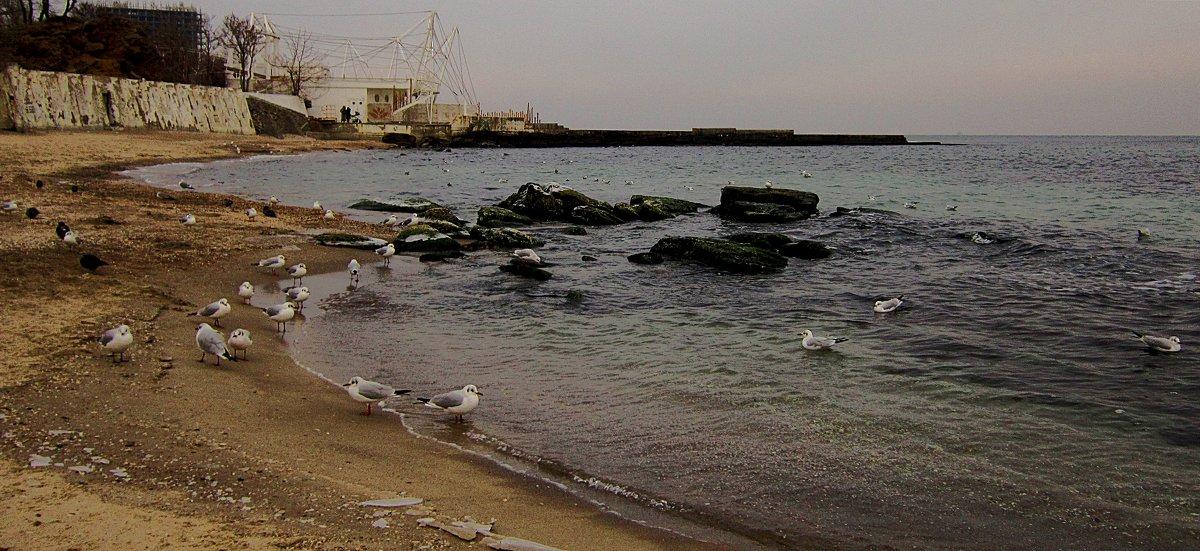 Зимний пляж и птицы - Людмила