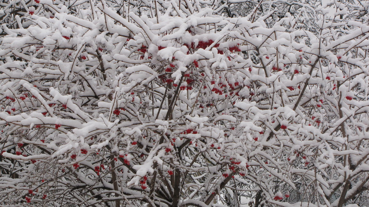Зима - Елена Безнасюк