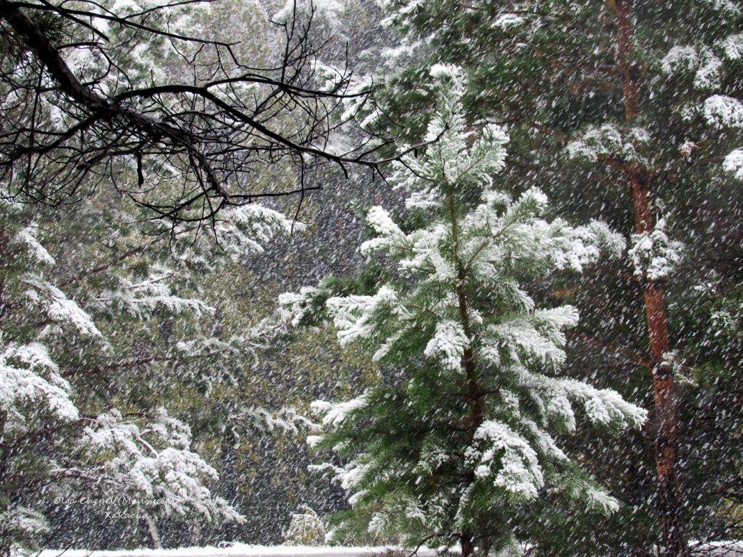 Падал первый снег, густой , пушистый... - MaOla ***