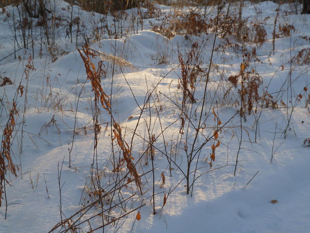 Зимой в лесу - Галина