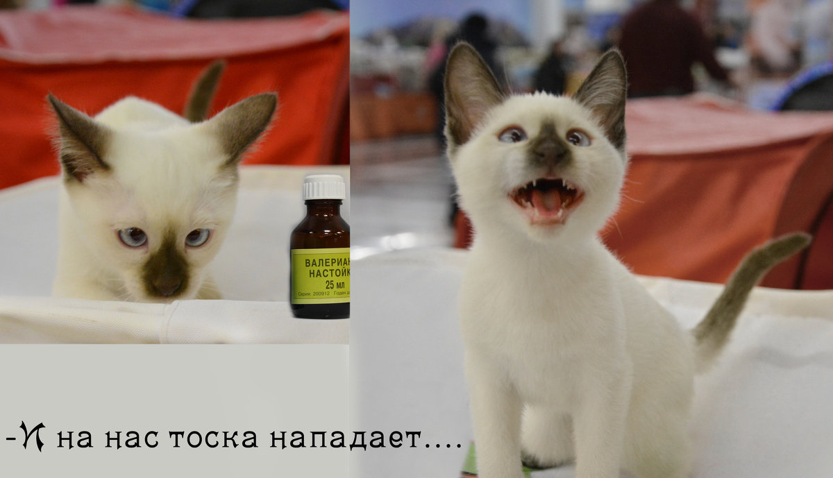 До и после - Наталия П