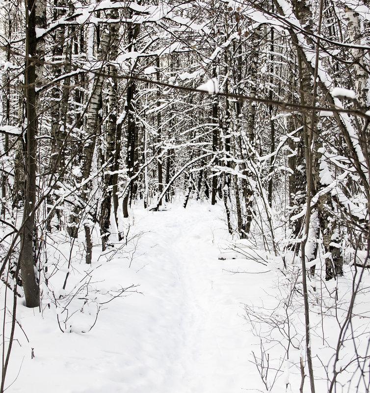 Зимний лес - Руслан Лутов