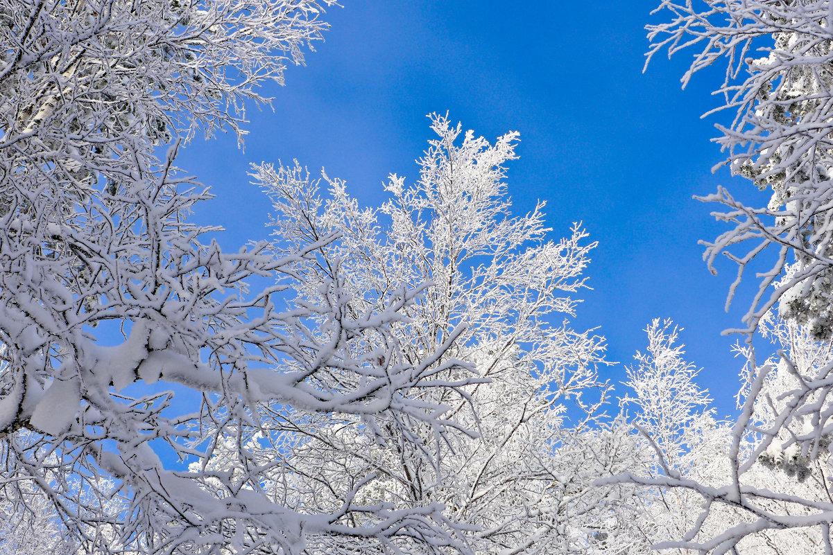 Мороз и солнце! - Светлана Игнатьева