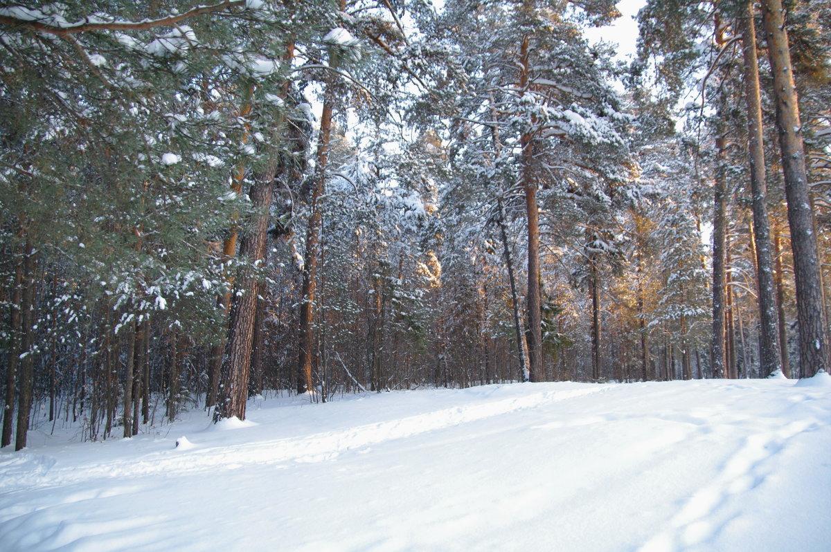 Морозное утро - Валерий Струк