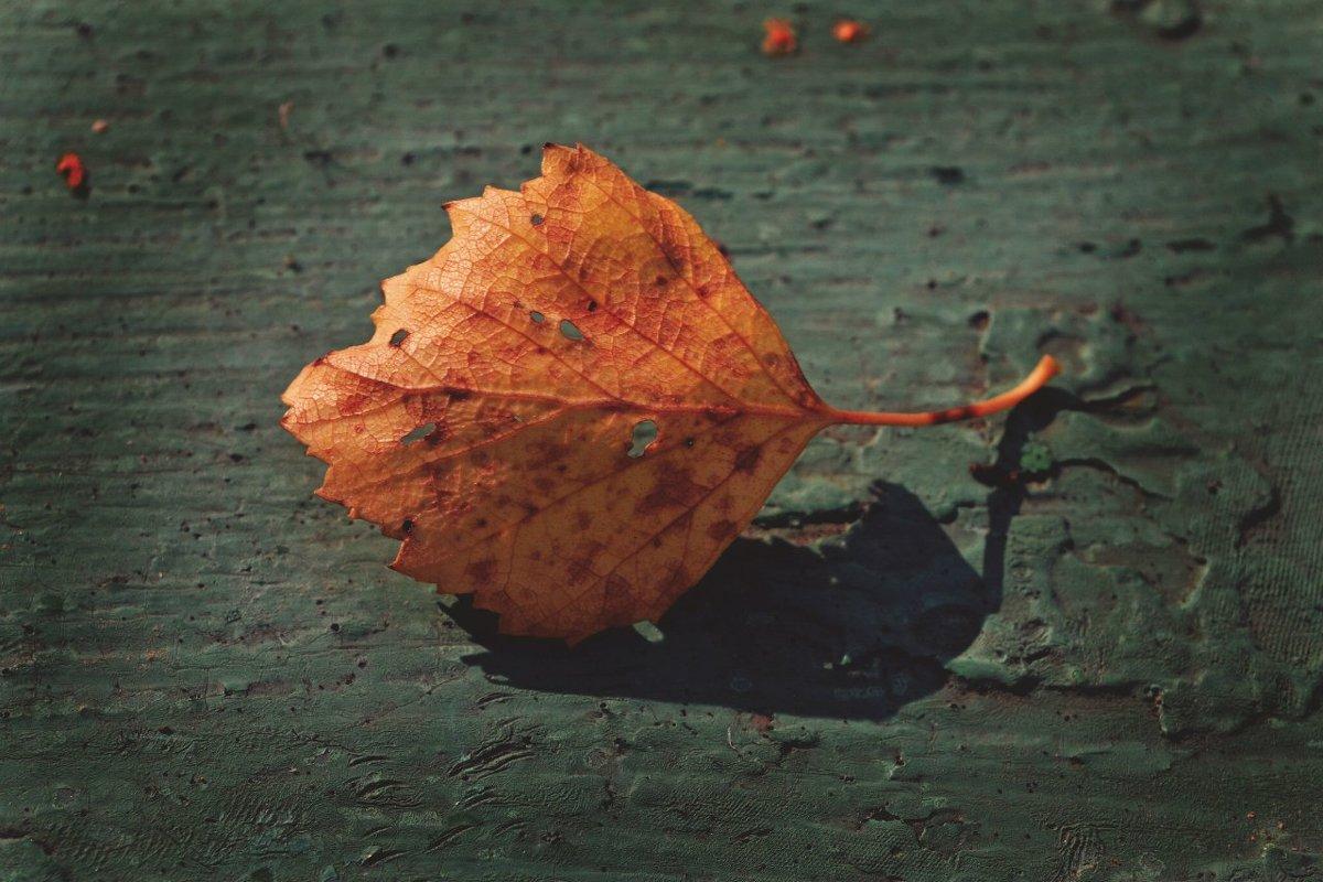 Осень - Julia Volkova