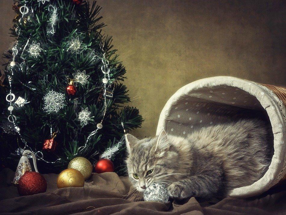 Из серии Новогодние истории - Ирина Приходько