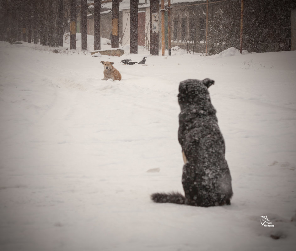 Вот и зима - Юрий Филоненко