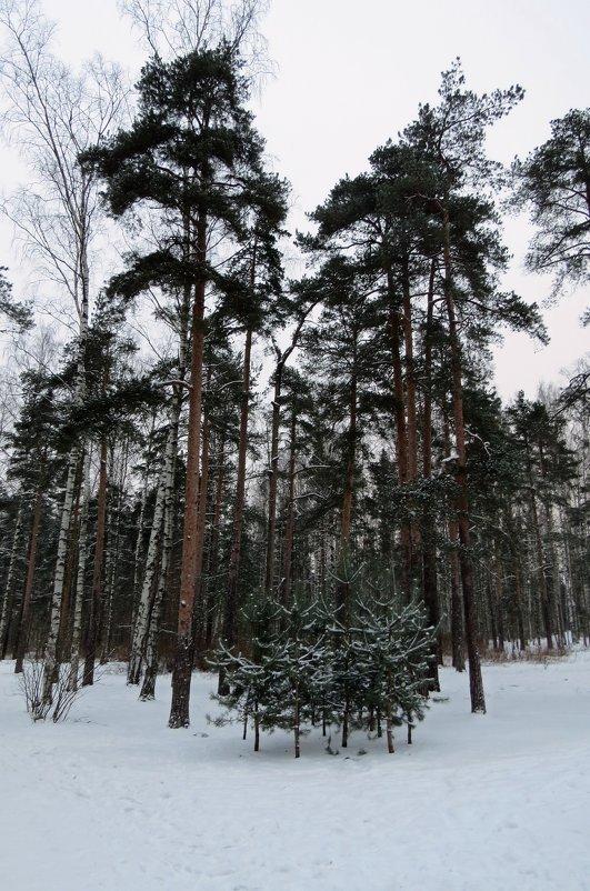 Парк - Вера Щукина