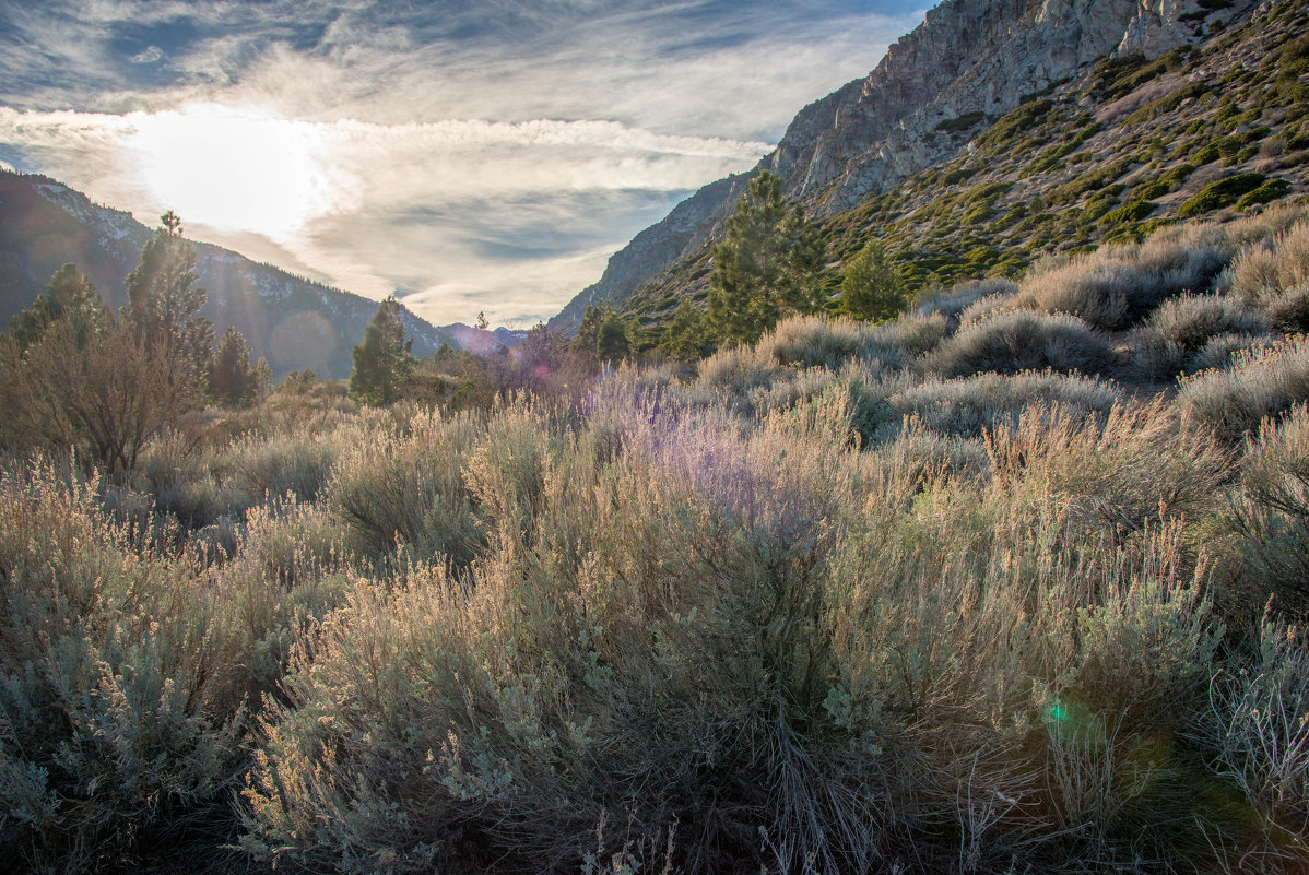 Sierra Nevada - Leonid