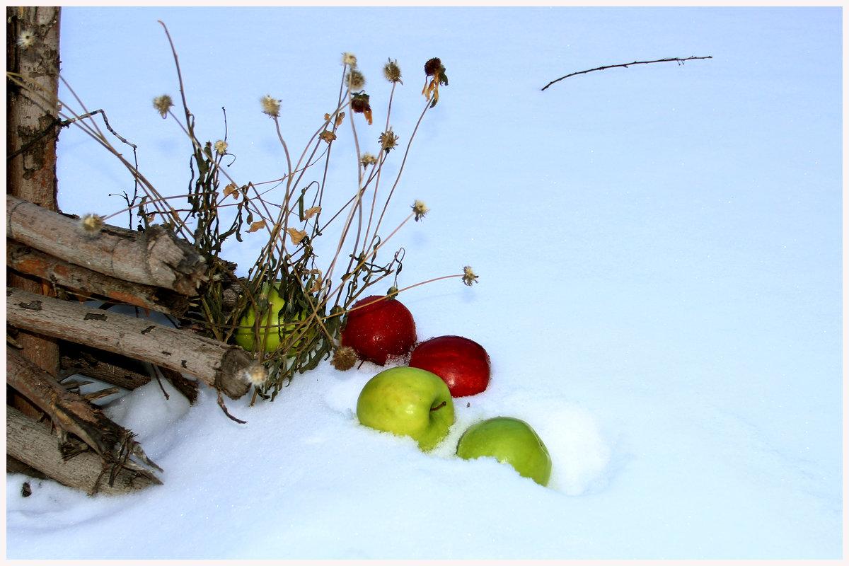 Яблоки на снегу, яблоки на снегу - юрий