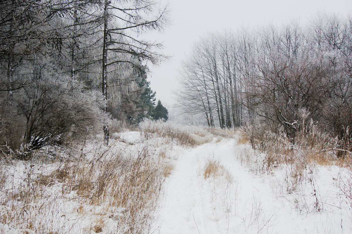 Кружевной лес - Oksana