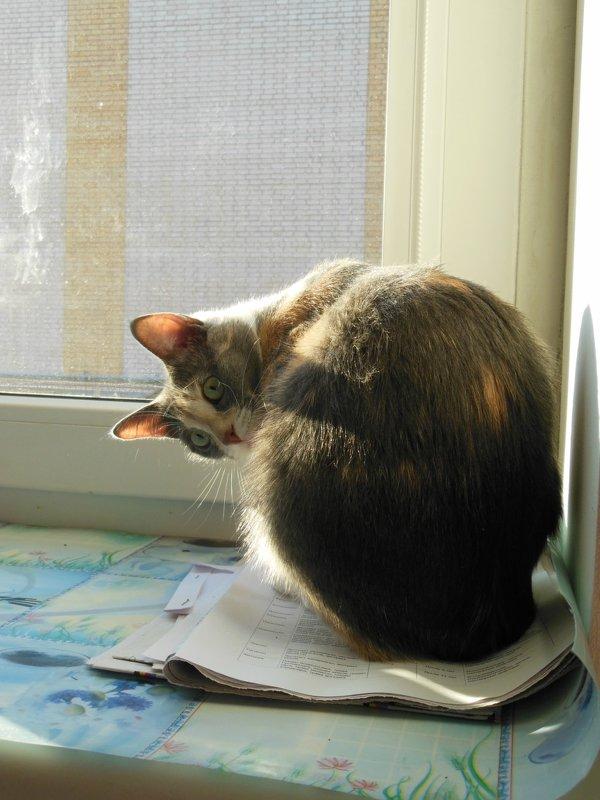 Сидит кошка на окошке.. - Татьяна