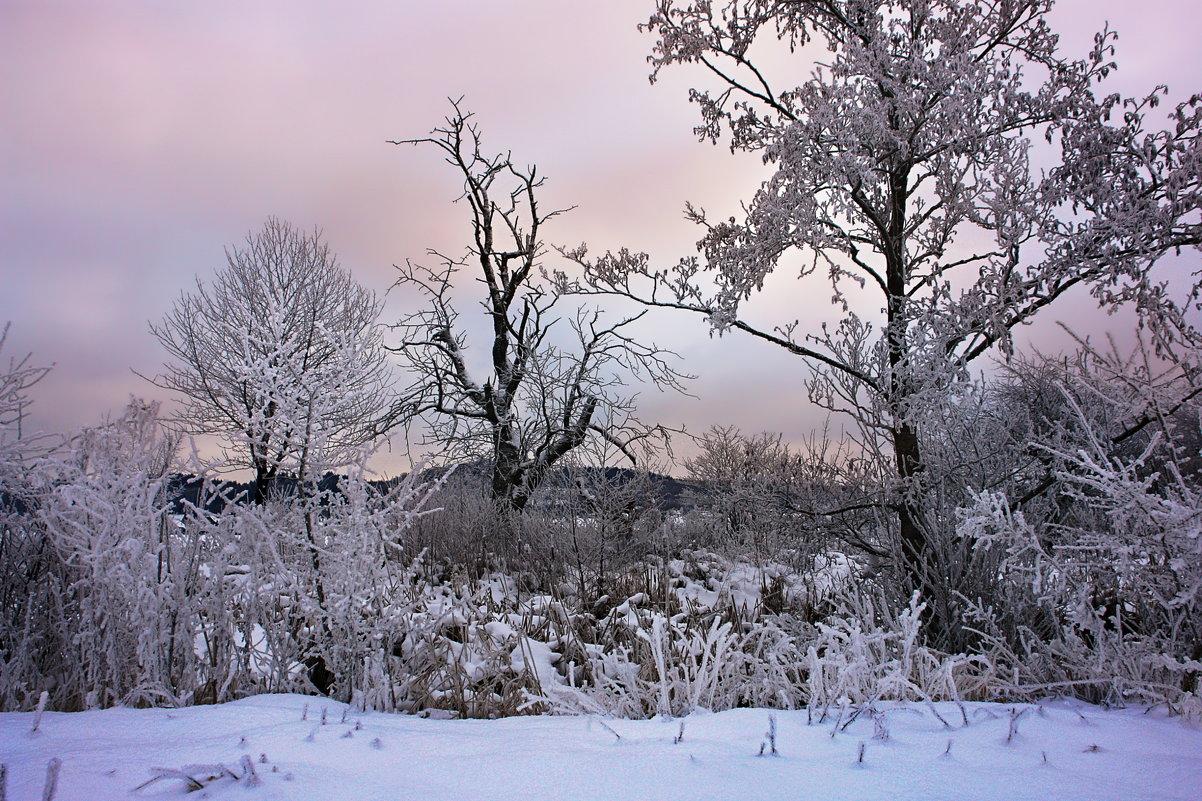 зимнее утро - Elena Wymann
