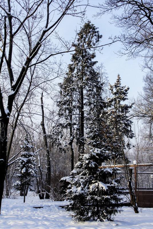 Зимний лес - Татьяна Колганова