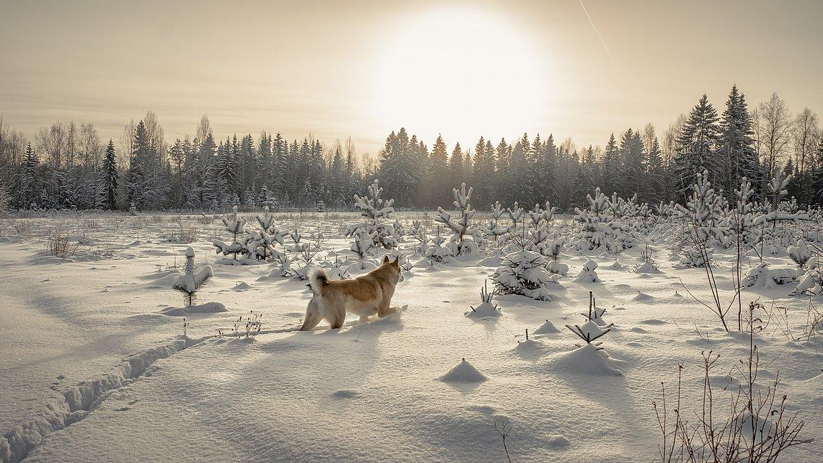 Прогулка с Туманом... - Федор Кованский